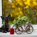 Садовая тележка двухколесная - фото 39580