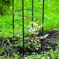 Пергола для растений