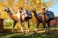 Верблюд ростовая фигура - фото 50552